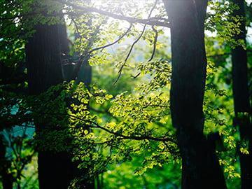 環境配慮は私たちの使命の一つ
